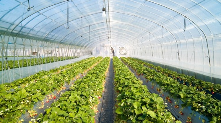 President Abdel Fatah al-Sisi inaugurated on Saturday a number of national projects including 1,300 greenhouses set up on an area of 10,000 feddans as part of the second phase of Mohamed Naguib sector for protected agriculture.