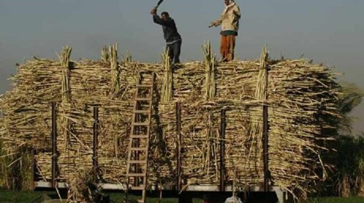 Egypt's Canal Sugar will produce 400,000 tonnes a year of white sugar when it starts production in the 2021 season, the chief executive said on Monday.