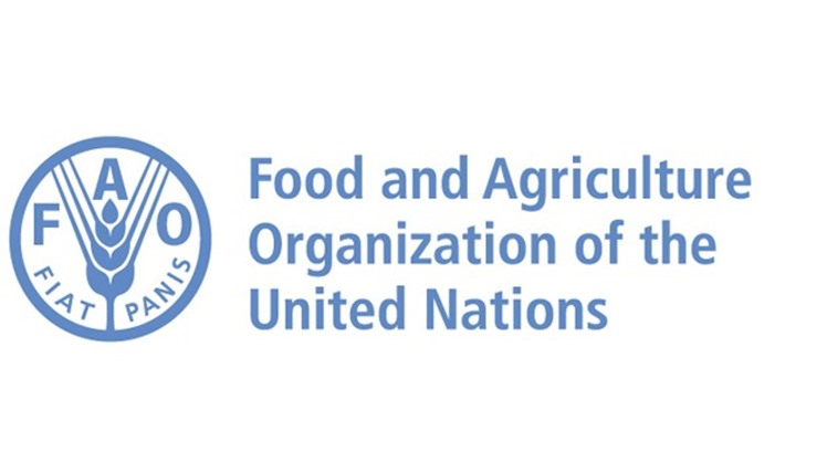 Celebrating the first International Day for Awareness of Food Loss and Waste, the United Nations Food and Agriculture Organization (FAO) hailed Egypt's projects aimed at reducing food loss and waste in partnership with the organisation.
