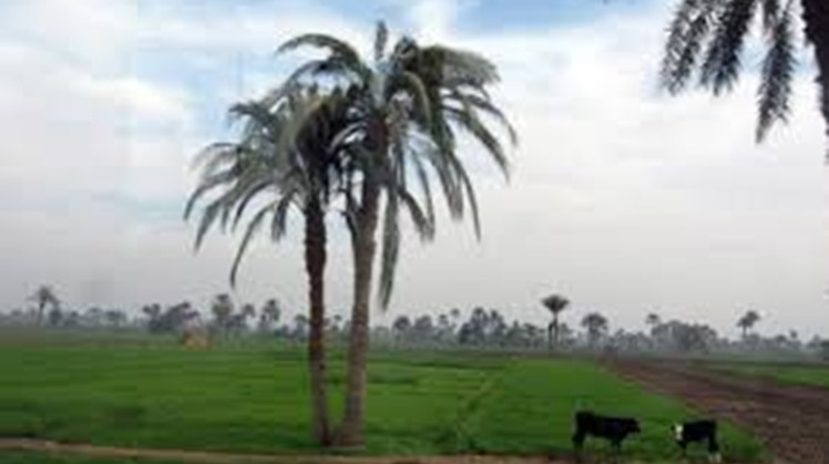 Egypt seeks to create integrated rural community in new villages