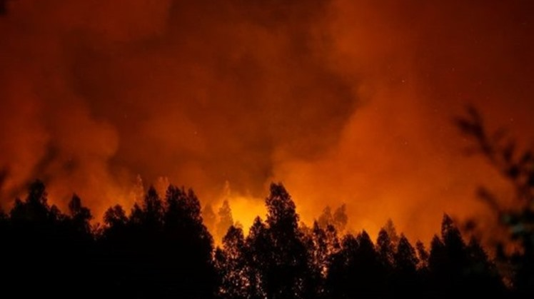 Egypt sends 2 equipped helicopters to Cyprus to contribute in extinguishing forest fires